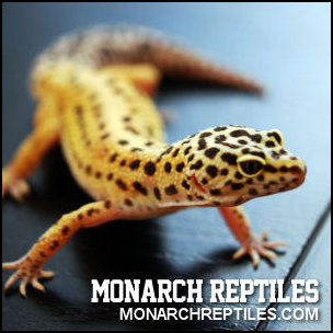 Monarch Reptiles